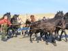 Paarden reddingsboot uit zee Ameland
