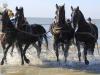 paarden uit zee Ameland Donna Antonia