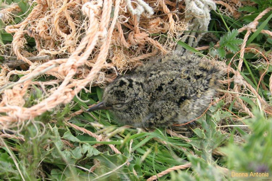 Afbeeldingsresultaat voor afbeelding camouflage vogels