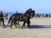 Paarden Ameland reddingsboot