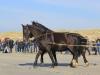 paarden reddingsboot Ameland